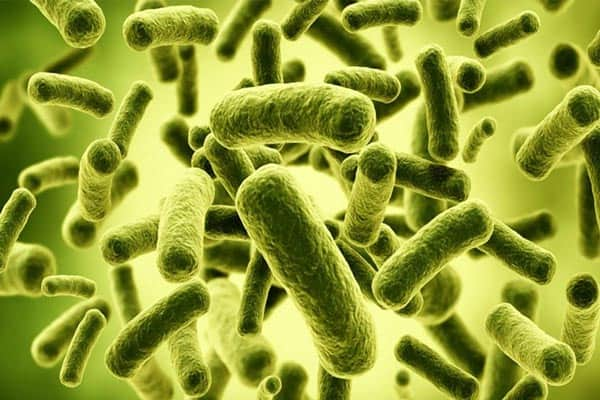 Choose the best probiotic supplement